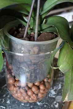 haldokló orchidea meggyógyítása - My site Potager Garden, Garden Plants, Container Gardening Vegetables, Vegetable Garden, Organic Vegetables, Growing Vegetables, Organic Gardening, Gardening Tips, Small Japanese Garden
