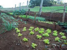 A horta é um local onde são cultivados legumes, hortaliças, temperos e ervas medicinais, mais conhecidos por chás. Liria Fritzen, cultiva em sua propriedade diversos tipos de hortaliças que servem para o consumo da família.