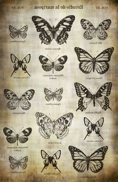 Butterfly Study Image Transfer Paper - On . - Butterfly Study Image Transfer Paper – On … – # Butterfly study image transfer paper - Tattoo Drawings, Body Art Tattoos, New Tattoos, Hand Tattoos, Small Tattoos, Cool Tattoos, Pretty Tattoos, Tatoos, Ankle Tattoos