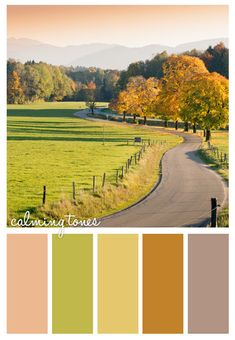 Oro en el techo: Color