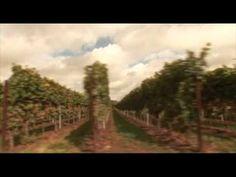 Weingut Alfons Ziegler St Martin Mit Bildern Weingut Wein Pfalz