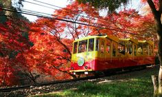 Mount Takao, a mountain which 2.6 million people climb annually from Shinjuku on Keio Line