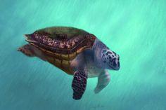 Happy Turtle - Digital Drawing - Print available #seaturtle #turtles #hawksbillTurtle #art #animals #animalart #murdocksgallery