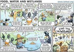 Celebrating World Wetlands Day | BirdLife