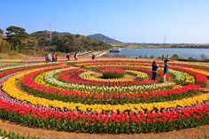 get a travel package for tulip festival kashmir India.