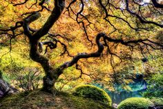 Nomadic Pursuits - HDR travel photography blog by Jim Nix - Blog - The Tree of Life