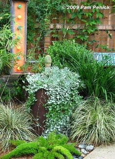 Container garden with cactus, sedum and Silver Ponyfoot.