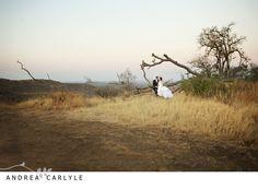Madikwe_Wedding_y_1024.jpg
