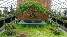 Orchids and Bonsai Heaven - Review of Buffalo and Erie County Botanical Gardens, Buffalo, NY - TripAdvisor