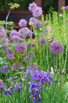 Allium-Dutch-Iris-Lupine