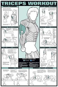Workout Fitness Chart (Co-Ed) Buy your Triceps Workout Fitness Chart (Co-Ed) at !Buy your Triceps Workout Fitness Chart (Co-Ed) at ! Fitness Workouts, Fitness Gym, Body Fitness, Fitness Goals, At Home Workouts, Fitness Motivation, Health Fitness, Workout Routines, Workout Plans