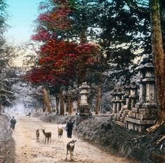 Hand-colored photo of Kasuga Shrine at Nara, Japan. Early 20th century, 1900-1920. Photographer unknown