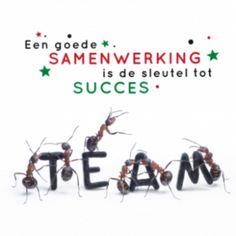 """Zakelijke kerstkaart foto van hardwerkende mieren, en toepasselijke tekst Team en """"Een goed samenwerking is de sleutel tot succes.""""."""