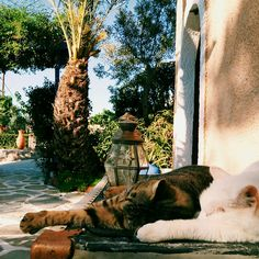 Cats chilling in the afternoon sun at Vagia.