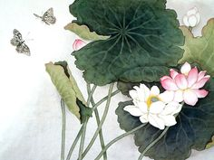 free online pictures 03278 lotus leaves lotus flowers pictures paintings , pics