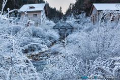 Frozen by morenogeremetta_it. Please Like http://fb.me/go4photos and Follow @go4fotos Thank You. :-)