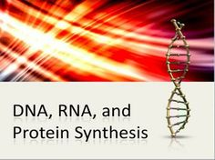 DNA (Deoxyribonucleic Acid), RNA, Protein Synthesis Powerpoint with notes for teacher and student.