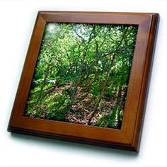3dRose - Jos Fauxtographee Realistic - Green and Blue Hues of Trees in Dixie National Forest in Pine Valley, Utah - Framed Tiles