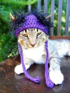 Halloween Cat Hat Costume - The Purple and Black Halloween Wackadoodle Hat for Cats and Small Dogs - Small Dog Halloween Pets