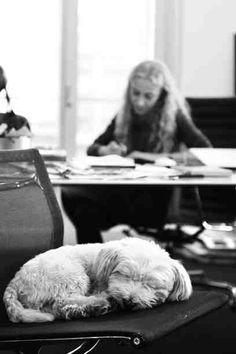 franca sozzani e lazlo in her office in milan by stefano guindani