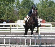 Lovin is a very brave mare. She's got a big step and will jump anything that's…
