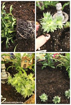 Step by step instructions on how to create a mini garden.