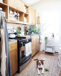 """WHITNEY LEIGH MORRIS on Instagram: """"There are some handy decor tips for small kitchens on @dominomag today-- including a few from #TheTinyCanalCottage  P.S. Sophee is recovering well from her surgery! This is where she sat this morning while I prepared this week's florals. I still can't get over her adorable ears..."""""""