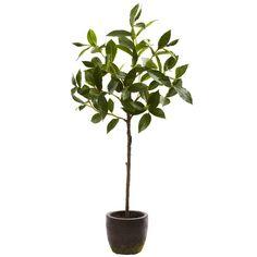 Topiary in Decorative Planter