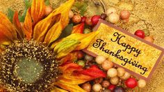 thanksgiving message to friends thanksgiving wishes wording happy thanksgiving quotes for friends and family thanksgiving messages for business short thanksgiving message thanksgiving greetings sayings thanksgiving wishes to clients thanks sms hindi Funny Happy Thanksgiving Images, Free Thanksgiving Wallpaper, Thanksgiving Day 2018, Thanksgiving Background, Thanksgiving Messages, Friends Thanksgiving, Canadian Thanksgiving, Thanksgiving Pictures, Thanksgiving Greetings