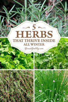 Start an indoor windowsill herb garden so you can enjoy fresh herbs all winter. I've experimented over the years with growing herbs inside during the winter. There are plenty of herbs that can be grown successfully through winter on a sunny windowsill. Here are my top 5 herbs that thrive indoors all winter.