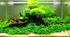 красивые аквариумы: 13 тыс изображений найдено в Яндекс.Картинках