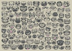 The many faces of pugs