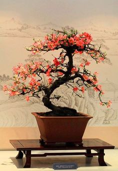 1000 Images About Japanese Tea Gardens Amp Bonsai On