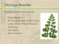 moringa oleifera ~ grows in hard scrabble places.  for purification, supplemental nutrion, a tea, a medicine, and protein powder.
