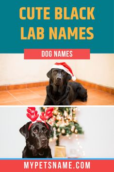 Floral names are such a cute choice for any dog, especially Black Labs! We love 'Daisy', a simple and elegant name, which is actually of French origin – it means 'day's eye'. Our list has many more cute Black Lab names for you to check out. Take a look!  #cuteblacklabnames #blacklabnames #cuteblacklabradornames Black Lab Names, Black Labs, Black Labrador, Cute Pet Names, Dog Names, Elegant Names, More Cute, Daisy