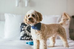 You're not the only one who deserves a holiday. Check in to one of these pet-friendly accommodation options around Australia for dogs, cats and even budgies.
