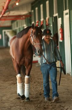 Pictures: Remembering Real Quiet, 1998 Derby and Preakness winner All The Pretty Horses, Beautiful Horses, Thoroughbred Horse, Dressage, Trick Riding, Derby Winners, Sport Of Kings, Horse World, Racehorse