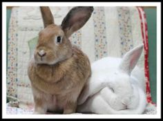 Roo & Scotty :: #bunny #rabbit #rescue