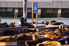 Pier 39 loved seeing the cute Sea Lions! They stole my heart