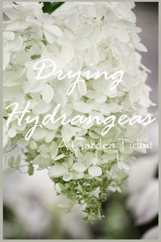 StoneGable: Drying Hydrangeas At StoneGable