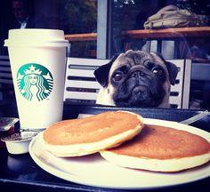 Pug Overload : Photo