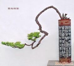 Một số tác phẩm Bonsai Hàn Quốc