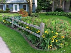 Split-rail fence installed by my husband to create an outdoor room for the front yard, here picturing Stella DOro daylilies and spirea in the foreground, the only plants in the front bed that receive any direct sun, and only for a few hours in the afternoon. 2 WAYS TO ENLARGE: Click directly on the photo to enlarge in a pop-up, or click HERE to see this image, larger, in a new browser window.
