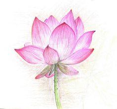 Lotus flower by Nedowo on DeviantArt