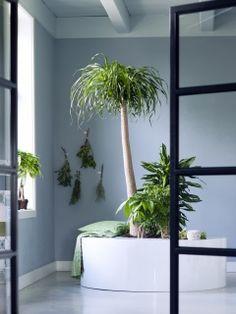 Zimmerbäume sind Pflanze des Monats – Pflanzenfreude.de
