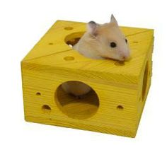 hamster toys and accessories - Google Search