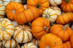 Pumpkin, pumpkins & more pumpkins! Check out this collection of over 40 pumpkin-inspired recipes, activities and more! #SoFabSeasons