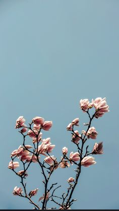 Spring Wallpapers Backgrounds Ideas for iPhone | Free Download |