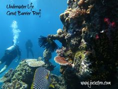 the-great-barrier-reef-by-jo-castro