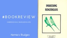 #Bookreview Inbreeding Budgerigars Animals And Pets, Baby Animals, Funny Animals, Cute Animals, Wild Animals, Budgies, Baby Dogs, Cats, Pets